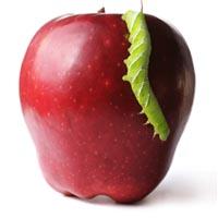 shutterstock_14003770_apple_bug_200px